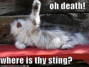 cat shakespeare